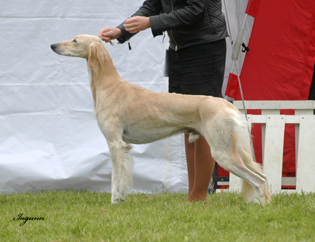 Anso Av All Sighthounds
